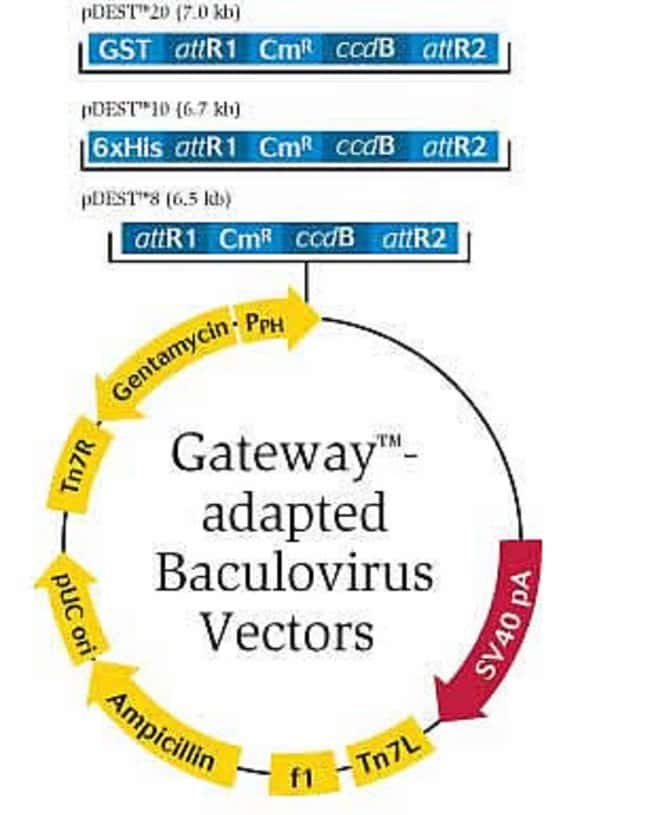 baculovirus expression system with gateway technology