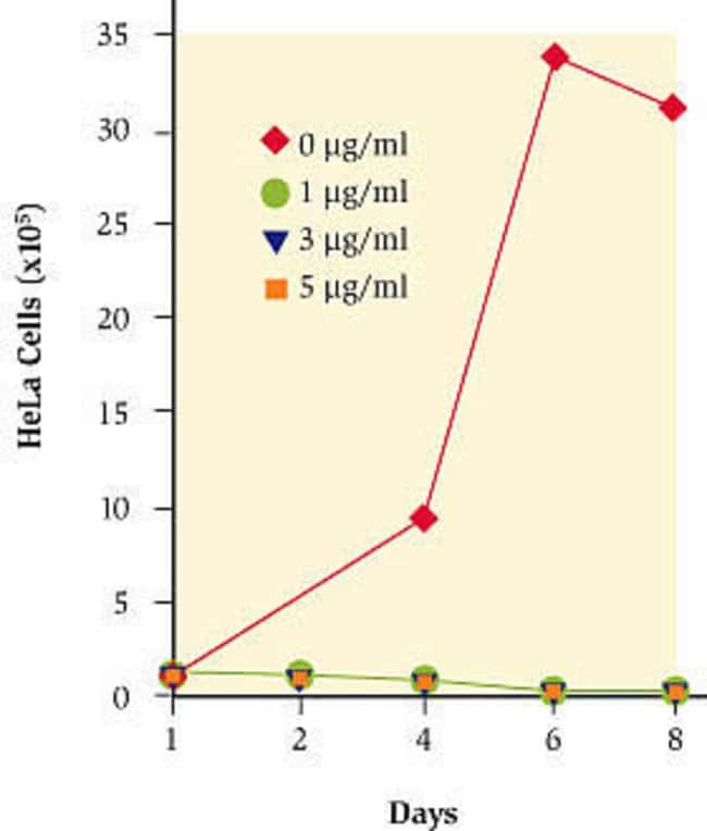 Figure 1 - Time course of selection with blasticidin