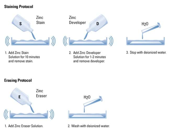 Protocol summary for the Zinc Stain Kit