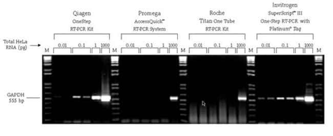 The SuperScript&reg; III One-Step RT-PCR System with Platinum® <i>Taq</i> provides the highest sensitivity available.