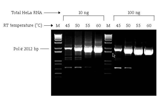 The SuperScript® III One-Step RT-PCR System with Platinum® <i>Taq</i> DNA Polymerase.