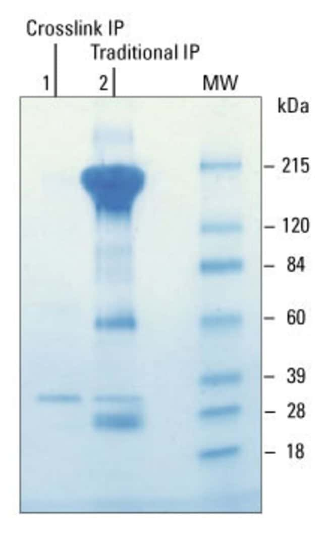Purify antigen without antibody intereference using the Crosslink IP Kit