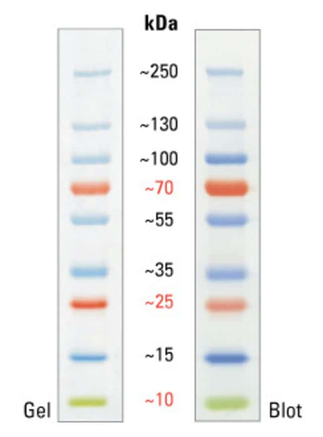 Fermentas Prestained Protein Ladder Sm0671 Image Of