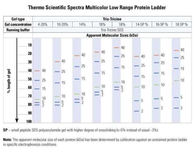 The apparent molecular weight of each protein (kDa) has been determined by calibration of each protein against an unstained protein ladder in specific electrophoresis conditions. Migration patterns we