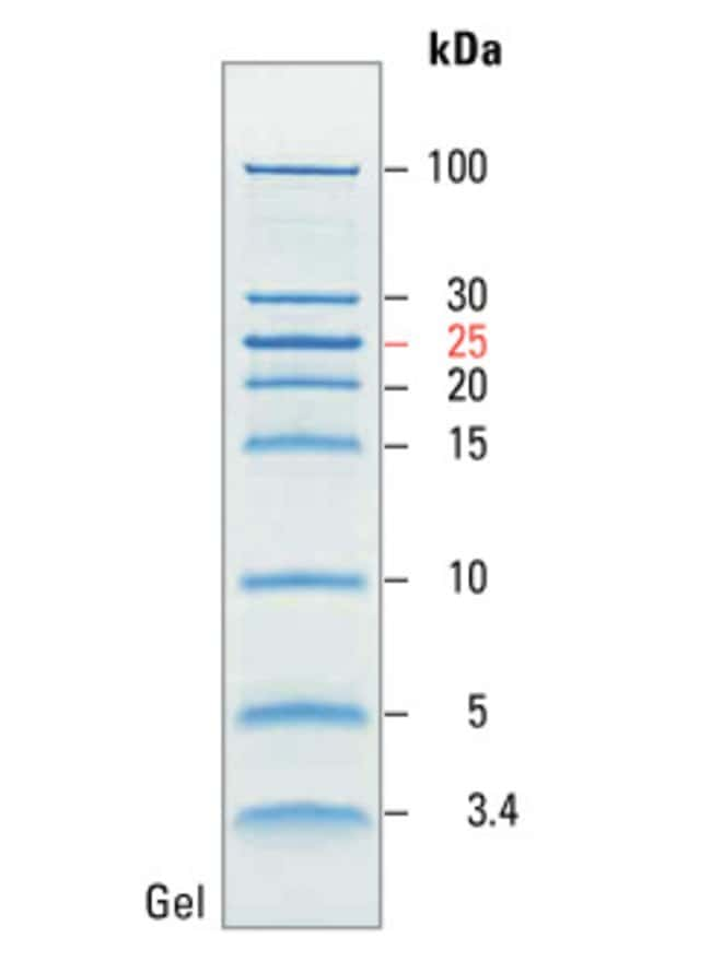 SDS-PAGE band profile of the PageRuler Unstained Low Range Protein Ladder