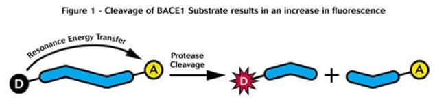 Figure 1 - Cleavage of BACE1 Substrate results in an increase in fluorescence