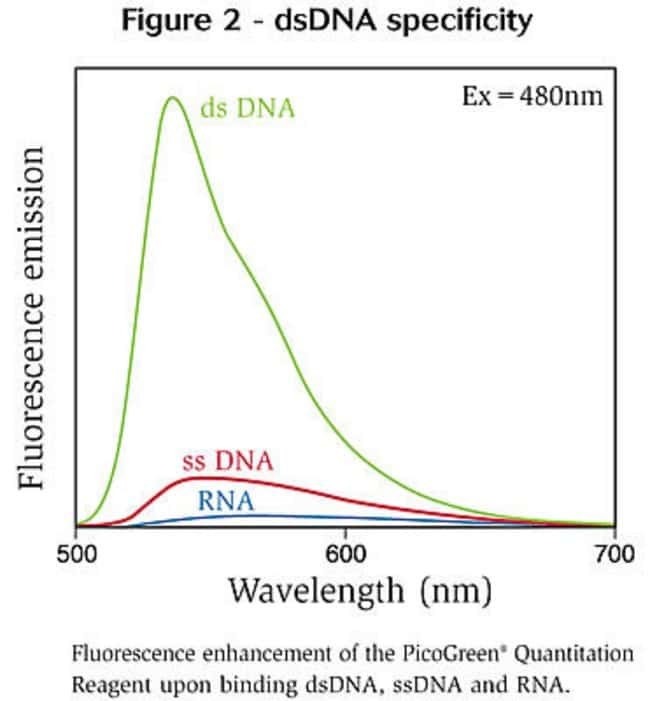 Figure 2 - dsDNA specificity