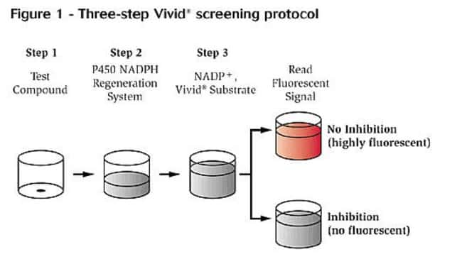 Figure 1 - Three-step Vivid screeing protocol