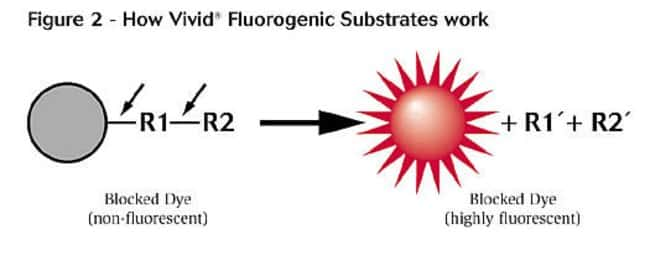 Figure 2 - How Vivid Fluorogenic Substrates work