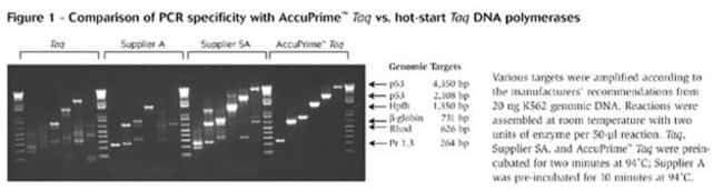 Comparison of PCR specificity with AccuPrime™ <i>Taq</i> DNA Polymerase versus hot-start <i>Taq</i> DNA polymerases.