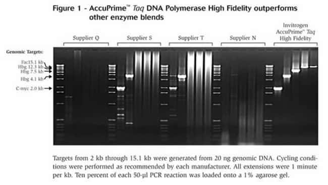 AccuPrime™ <i>Taq</i> DNA Polymerase High Fidelity outperforms other enzyme blends.