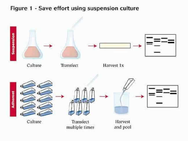 Save effort using suspension cultures.