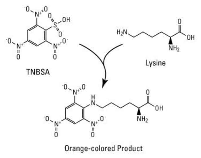 TNBSA reaction scheme for detection of primary amines