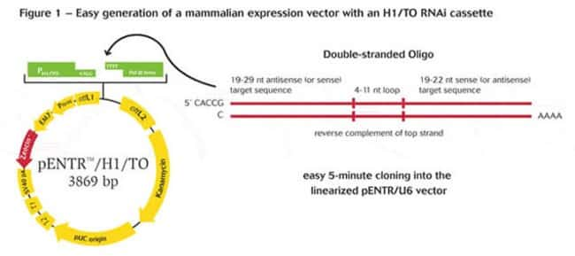 Figure 1 - Easy generation of a mammalian expression vector with an H1/TO RNAi cassette