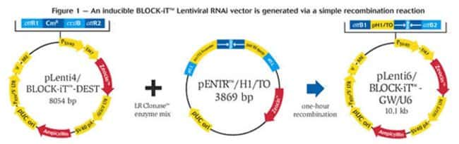 Figure 1 - An inducible BLOCK-iT™ Lentiviral RNAi vector is generated via a simple recombination reaction