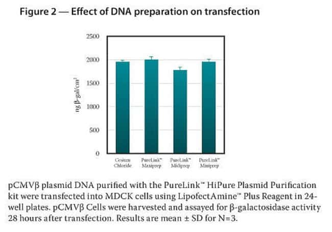 Effect of DNA preparation on transfection.