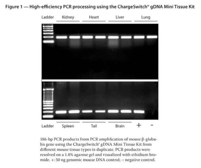 Figure 1 - High-efficiency PCR processing using the ChargeSwitch® gDNA Mini Tissue Kit