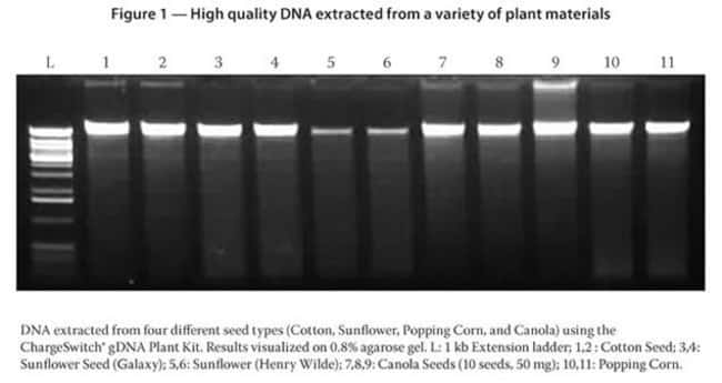 Figure 1 - High quality DNA extracted from a variety of plant materials