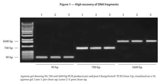 Figure 1 - High recovery of DNA fragments