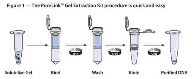 The PureLink™ Gel Extraction Kit procedure is quick and easy.