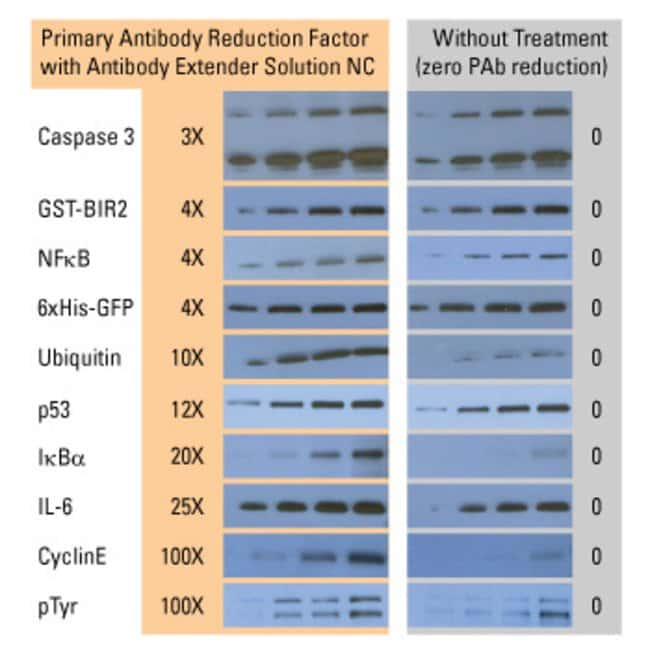 Use 3 to 100 times less primary antibody (PAb) after membrane treatment with Antibody Extender Solution NC