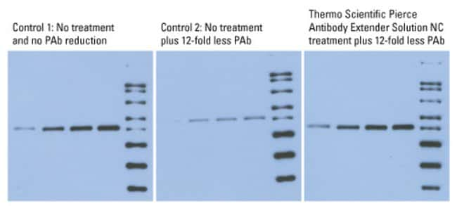 Treatment with Antibody Extender Solution NC enables p53 detection with 12 times less primary antibody