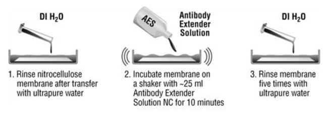Protocol summary for Antibody Extender Solution NC