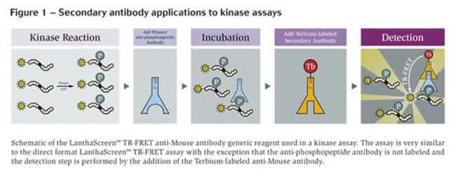 Figure 1 - Secondary antibody applications to kinase assays