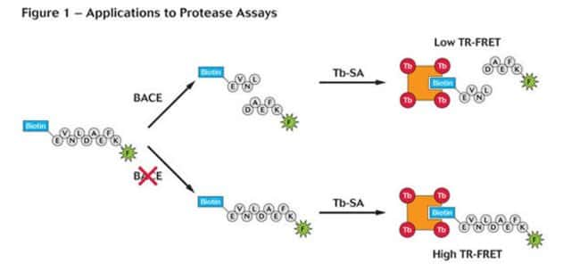 Figure 1 - Applications to Protease Assays