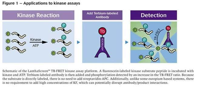 Figure 1 - Applications to kinase assays