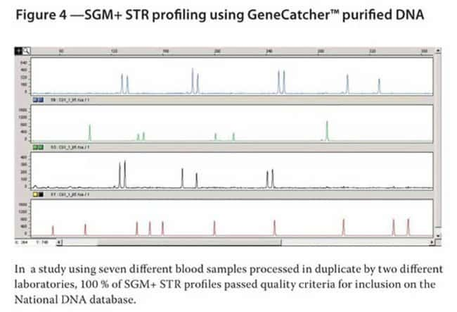 Figure 4 - SGM+ STR profiling using GeneCatcher™ purified DNA
