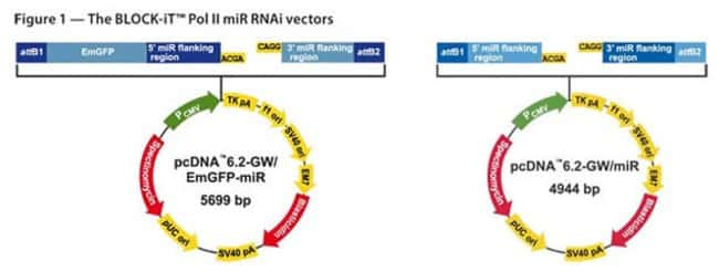Figure 1 - The BLOCK-iT™ Pol II miR RNAi Expression Vectors