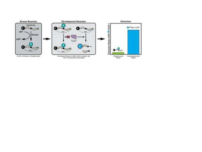 Schematic of the Z´-LYTE™ Assay
