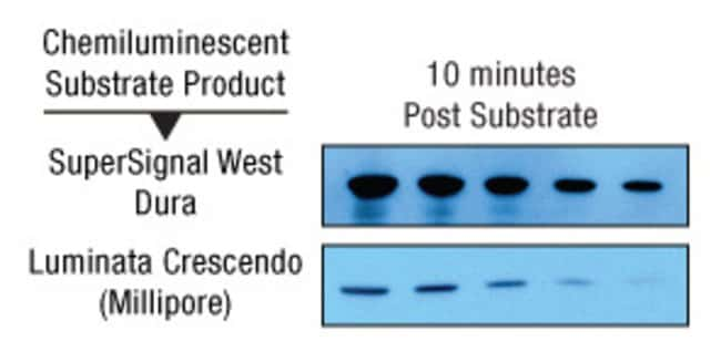 Blots detected using Thermo Scientific SuperSignal West Dura Substrate (top) or Luminata™ Crescendo Western HRP Substrate (EMD Millipore Corp.) (bottom) at 10 minutes post substrate incubation.