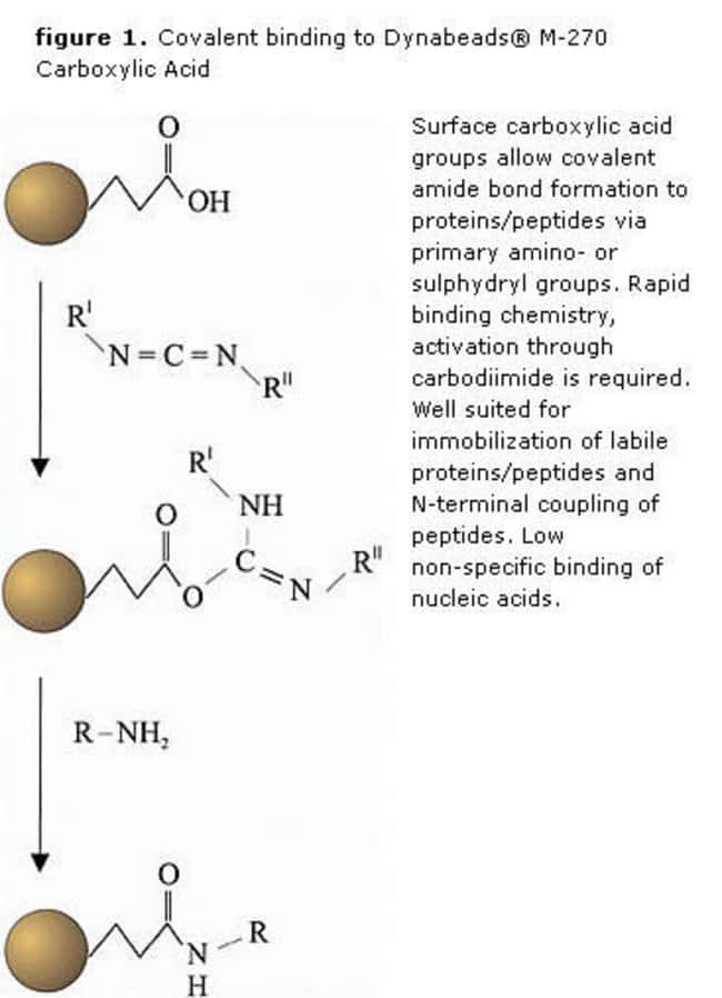 figure 1. Covalent binding to Dynabeads® M-270 Carboxylic Acid
