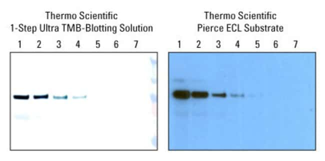 1-Step Ultra TMB-Blotting Solution provides sensitivity similar to ECL Western Blotting Substrate