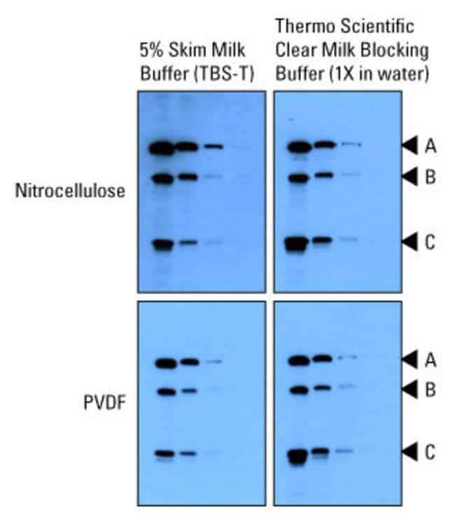 Milk blocking buffer compatibility with nitrocellulose and PVDF membranes