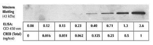 The sensitivity of this ELISA was compared to Western blotting using known quantities of CREB. The data show that the sensitivity of the ELISA is approximately 4x greater than that of Western blotting. The bands shown in the Western blot data were develop