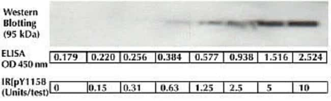 The sensitivity of this ELISA was compared to Western blotting using known quantities of IR [pY1158]. The data show that the sensitivity of the ELISA is approximately 2x greater than that of Western blotting. The bands shown in the Western blotting data w