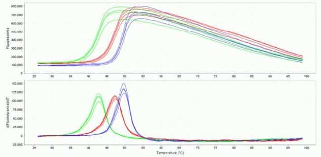 Example data for a buffer screen experiment processed with the Protein Thermal Shift® software. Three different buffers ranging in pH from 6.0-7.5 were screened using the StepOnePlus® Real-Time PCR Sy