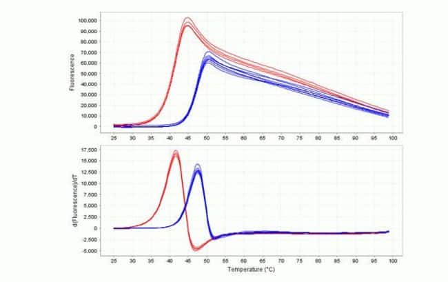 In this example, binding of a ligand to the protein of interest results in increased thermal stability as represented by the shift of the melt curve and measured T<sub>m</sub>. The red curves represen
