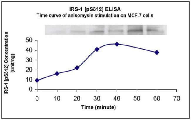 MCF-7 cells were treated with 100 uM anisomysin and 50 nM calyculin for the indicated time. The same cell extract preparations were used for all analyses.