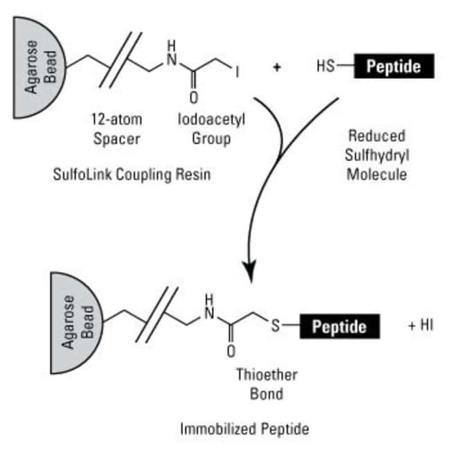 Peptide immobilization chemistry for SulfoLink Coupling Resins
