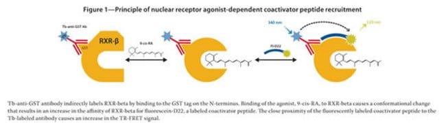 Figure 1 - Principle of nuclear receptor agonist-dependent coactivator peptide recruitment