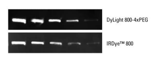 Infrared Western blot detection of Hsp86 using a rabbit anti-Hsp86 primary antibody and a goat anti-rabbit secondary antibody conjugated to DyLight 800-4xPEG or IRDye 800 (LI-COR Biosciences) dyes.