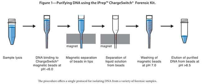 Figure 1—Purifying DNA using the iPrep™ ChargeSwitch® Forensic Kit.