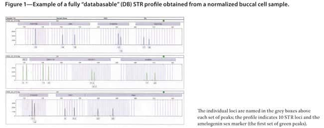"""Figure 1—Example of a fully """"databasable"""" (DB) STR profile obtained from a normalized buccal cell sample."""