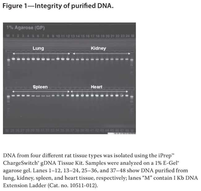 Figure 1—Integrity of purified DNA.