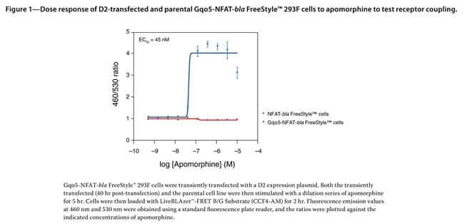 Figure 1 - Dose response of D2-transfected and parental Gqo5-NFAT-bla FreeStyle™ 293F cells to apomorphine to test receptor coupling.