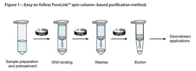 "Easy-to-follow PureLinkâ""¢ spin column–based purification method."